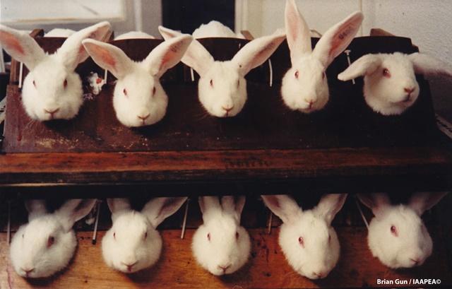 Rabbits - Credit to Brian Gunn, IAAPEA - Copy
