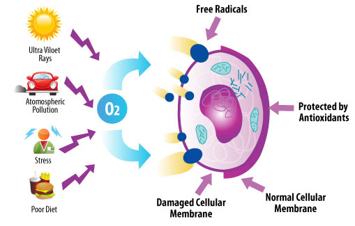 bella-terra-mineral-cosmetics-free-radical-fighting2